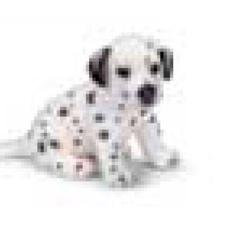 Dalmation Puppy